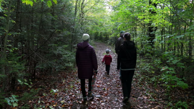 family exploring forest on hiking trail in autumn - sentiero video stock e b–roll