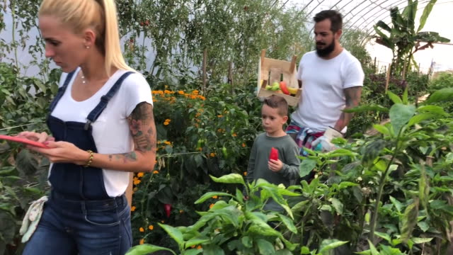family farming together - greenhouse stock videos & royalty-free footage