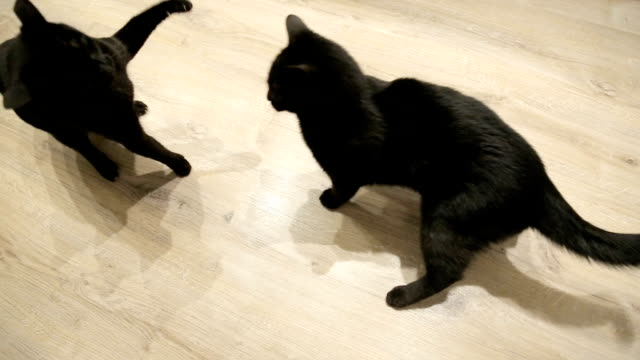 familienkampfkatzen - aggression stock-videos und b-roll-filmmaterial