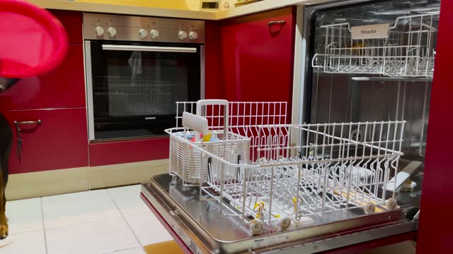 stockvideo's en b-roll-footage met family from the town of lehmrade in northern germany boast the luxury of having a pet that can help out with household chores,... - https