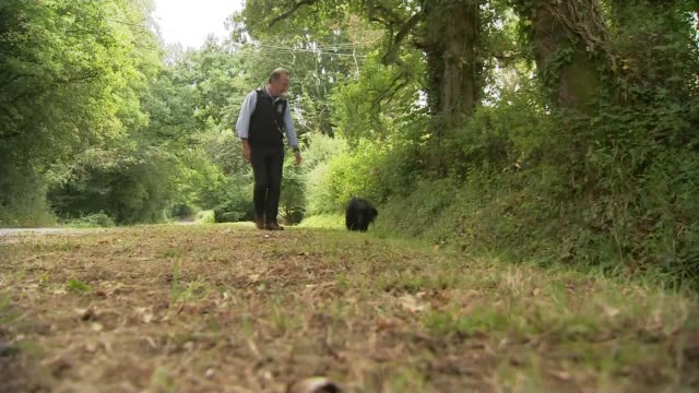 family from wandsworth spends thousands on search after pet dog goes missing on sussex holiday england west sussex ext sharon bierer and henrik... - missing poster stock videos & royalty-free footage