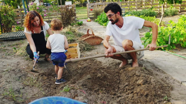 family gardening together - gardening glove stock videos & royalty-free footage