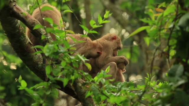 family grooming. - grooming animal behavior stock videos & royalty-free footage