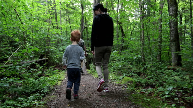 family hiking in the forest in summer - natural parkland stock videos & royalty-free footage