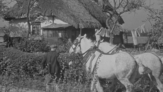 1947 montage family home in the country with limited modern resources, with the housewife hanging out laundry and draft horses being brought in from the fields by the farmer / united kingdom - zugpferd stock-videos und b-roll-filmmaterial