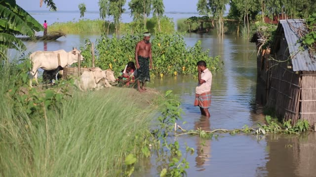 a family leads life on boat in a flood affected area in lalmonirhat district bangladesh on july 15 2017 flooding sparked by heavy seasonal rains and... - livestock stock videos and b-roll footage