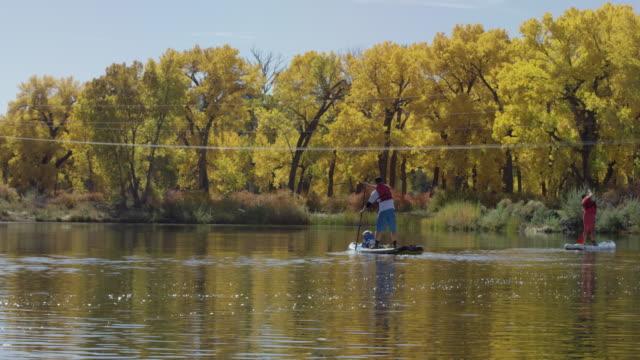 eine familie (ein vierzig-etwas mann, ein vierzig-etwas frau und ein vier-jähriger junge) gemächlich stand up paddleboards (sup) in einem see im herbst unter einem sonnigen himmel in western colorado - schwimmweste stock-videos und b-roll-filmmaterial