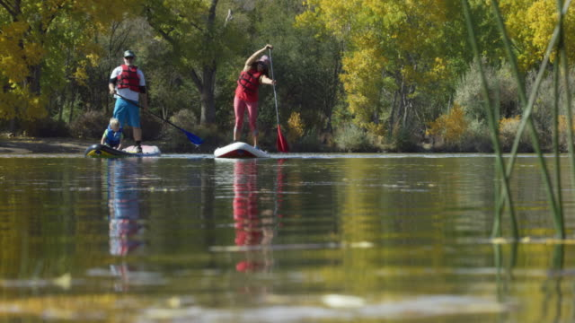 vídeos de stock e filmes b-roll de a family (a forty-something man, a forty-something woman, and a four year-old boy) leisurely stand-up paddleboards (sup) in a lake in autumn under a sunny sky in western colorado - água parada