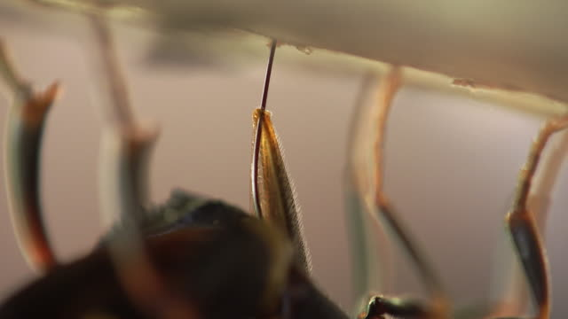 family leucospidae inserting its ovipositor into a wood - named wilderness area stock videos & royalty-free footage