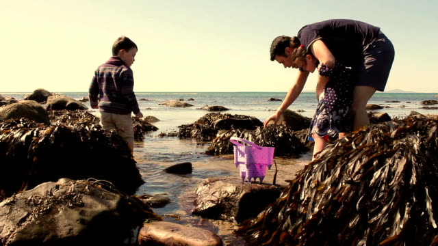 Family Looking For Crabs In A Rock Pool