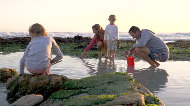 family looking in rockpools on beach - candid stock videos & royalty-free footage