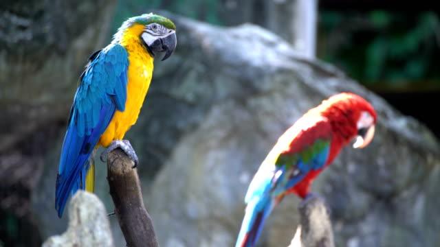 stockvideo's en b-roll-footage met familie macaws - neerstrijken