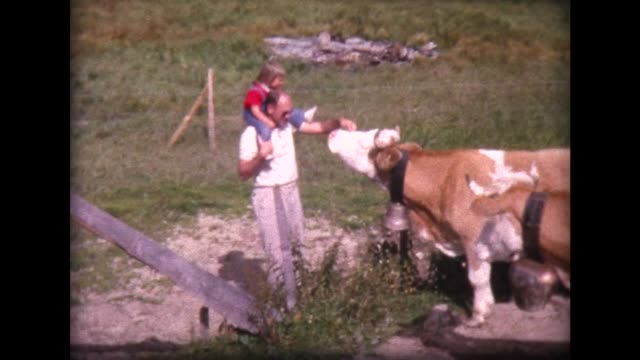 stockvideo's en b-roll-footage met 1963 family meets herd of swiss cows with large cow bells - gehoornd