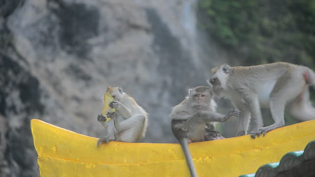 Family monkey are rest and clean body