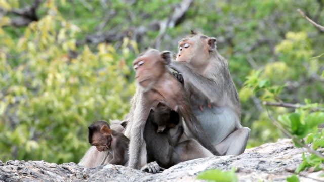 Family Monkey