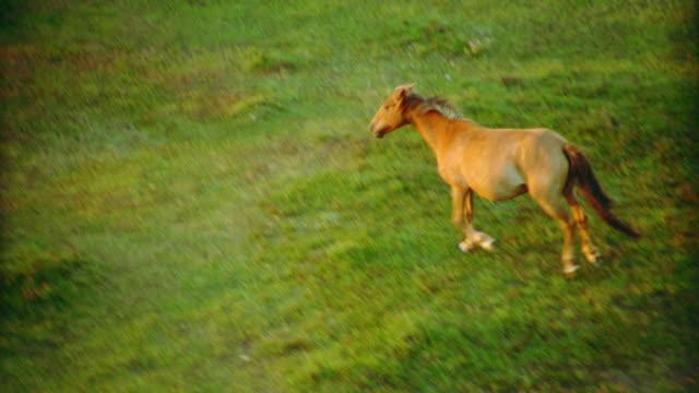vídeos y material grabado en eventos de stock de aerial family of brown ponies running in countryside / new forest, hampshire, england - hampshire