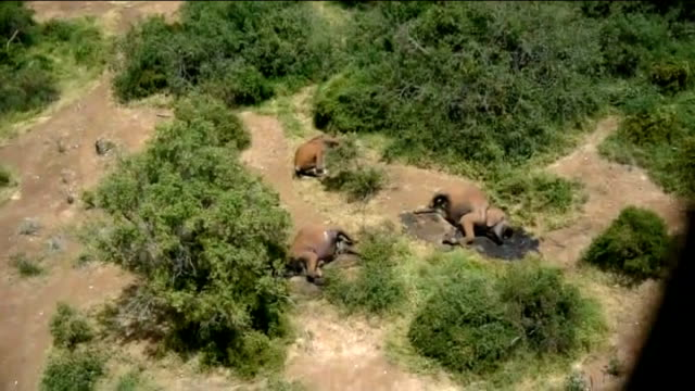 Family of elephants slaughtered for ivory in wildlife reserve KENYA Tsavo National Park helicopter shots over National Park and showing family of...
