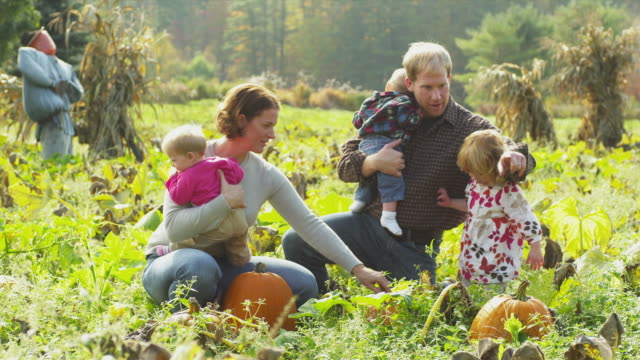 MS Family of five picking pumpkins on field, Manchester, Vermont, USA
