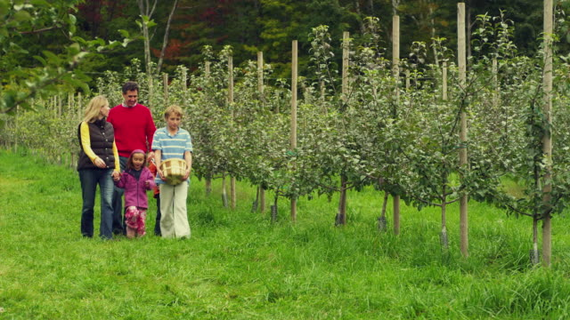 vidéos et rushes de ms pan family of five walking in apple orchard, manchester, vermont, usa - manchester vermont