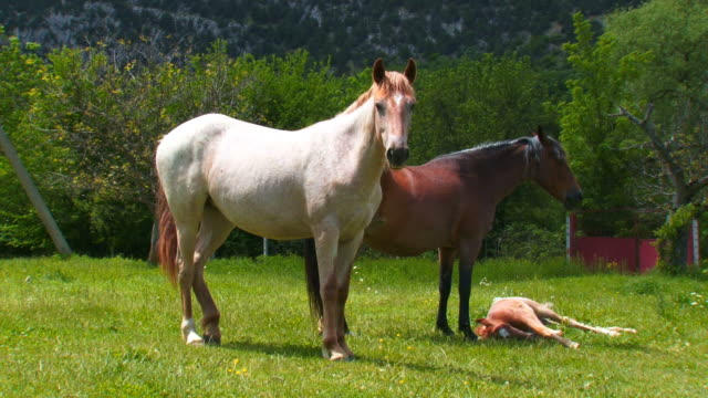 family of horses with a foal
