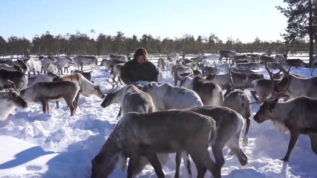 A family of reindeer herders the Sopochins have seen six oil fields dug on land set aside for their clan to lead a traditional way of life but say...