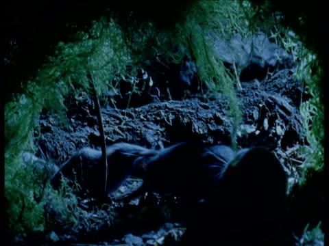 vídeos y material grabado en eventos de stock de family of shrews caravan through forest at night, europe - piña de piñones