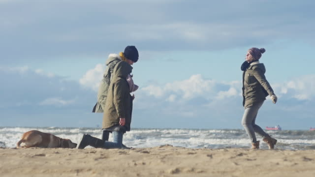 family on beach with dog - woolly hat stock videos and b-roll footage