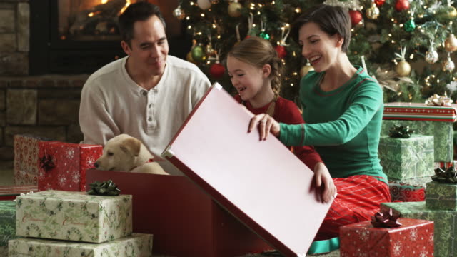 vidéos et rushes de family opening a christmas present together to find a puppy inside - cadeau