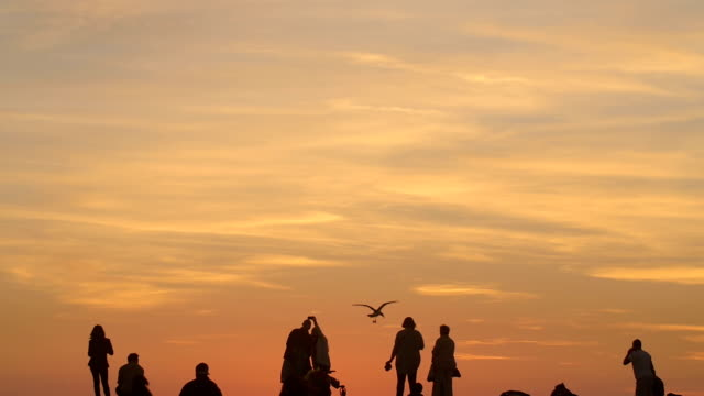 family, parents, couples, enjoying sunset over horizon - gruppo medio di animali video stock e b–roll