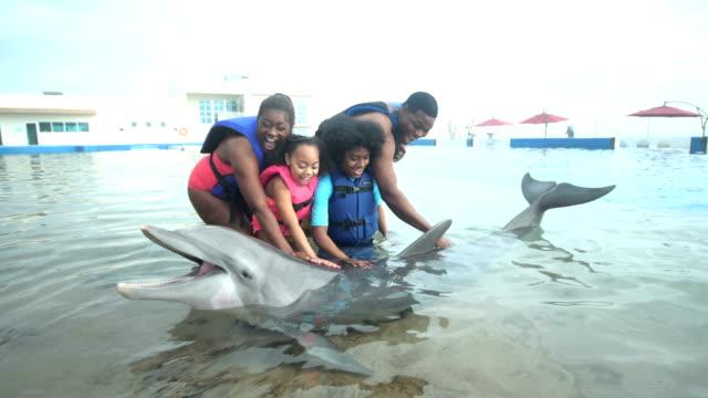 vídeos de stock e filmes b-roll de family petting dolphin - 14 15 years