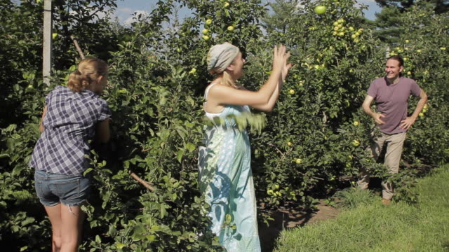 stockvideo's en b-roll-footage met ws family picking apples together / lebonan township, new jersey, usa - bijten