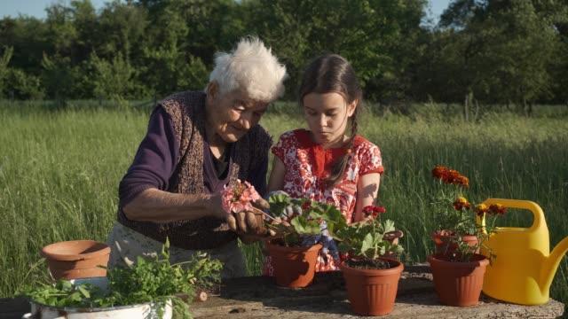 familie pflanzt eine blumen im garten. - film filmtechnik stock-videos und b-roll-filmmaterial