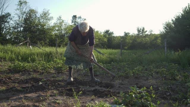 familie pflanzt ein gemüse im garten. - soziales thema stock-videos und b-roll-filmmaterial