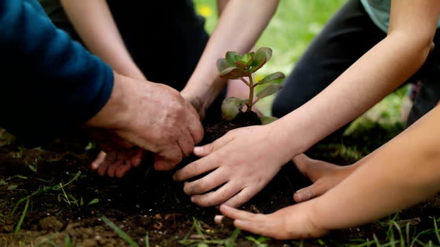 family planting flowers together. - giardinaggio video stock e b–roll