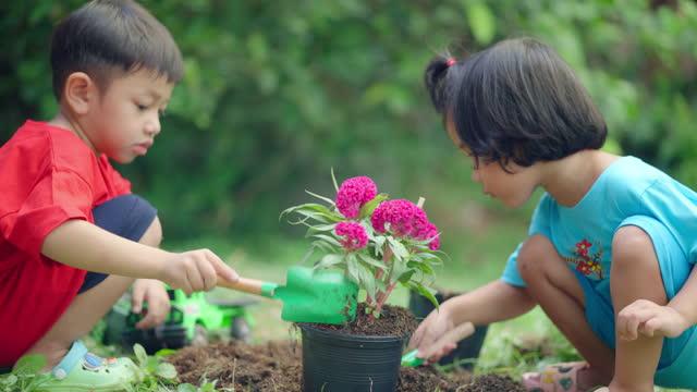 花を植える家族。 - 甥点の映像素材/bロール