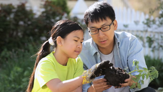 cu pan td tu family planting organic vegetables  / richmond, virginia, united state - vegetable garden stock videos and b-roll footage