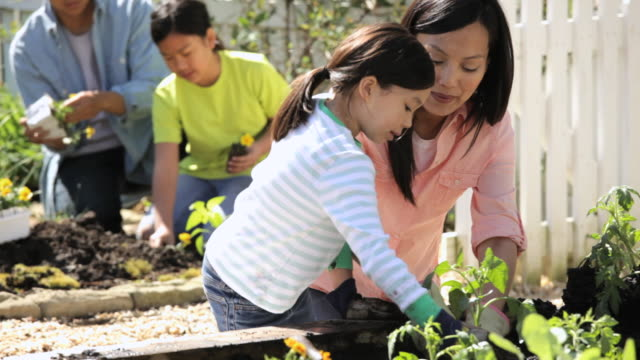 cu pan td family  planting organic vegetables / richmond, virginia, united state - ガーデニング点の映像素材/bロール