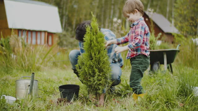 family planting tree at back yard - evergreen tree stock videos & royalty-free footage