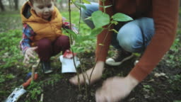 Family planting tree on Arbor day in springtime
