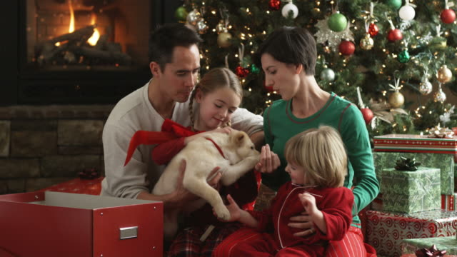 family playing with a new puppy on christmas morning - pacific islander family stock videos & royalty-free footage
