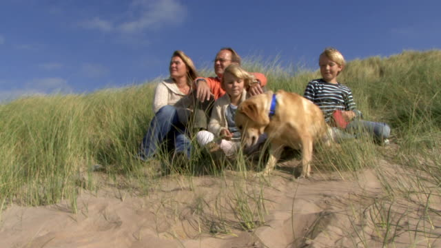 ws, family portrait in dunes with dog - blue dog stock videos & royalty-free footage