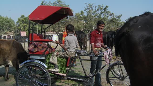 family rickshaw loaded up with vegetation. - arbetsdjur bildbanksvideor och videomaterial från bakom kulisserna