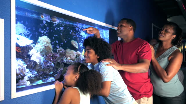 family, two children at aquarium observing fish tank - aquarium stock videos & royalty-free footage