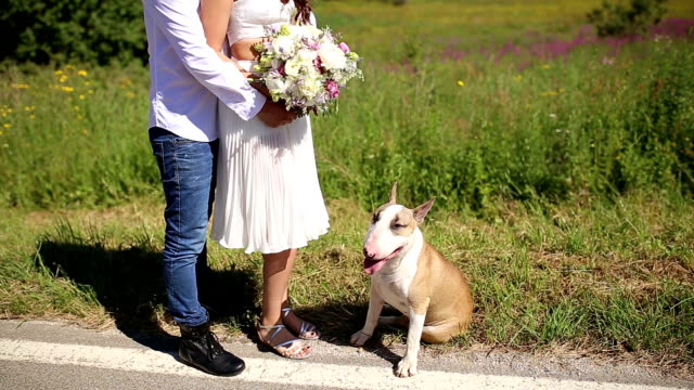 family - pampered pets stock videos and b-roll footage