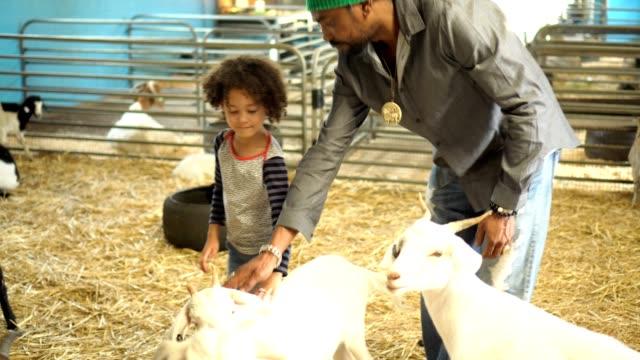 vídeos de stock, filmes e b-roll de família visitou uma fazenda orgânica - jardim zoológico