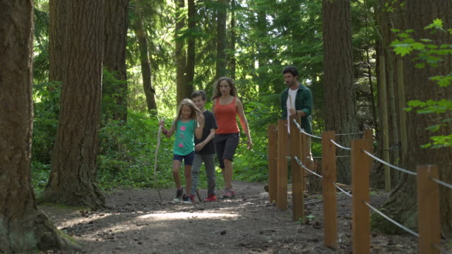 family walking down forest path - stato di washington video stock e b–roll