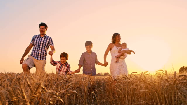 slo mo family walking in wheat field at sunset - family with three children stock videos & royalty-free footage