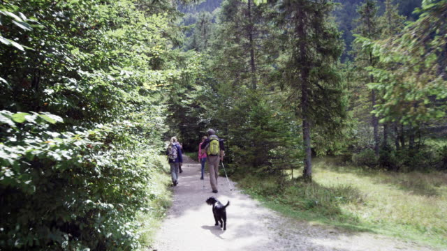 family walking through forest, with dog, from behind - familie mit zwei generationen stock-videos und b-roll-filmmaterial