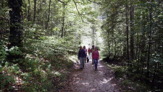 family walking through forest, with dog, from the front - familie mit zwei generationen stock-videos und b-roll-filmmaterial