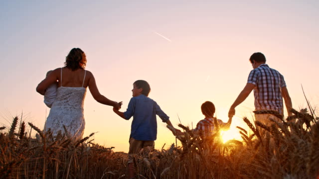 slo mo family walking through wheat field at sunset - family with three children stock videos & royalty-free footage